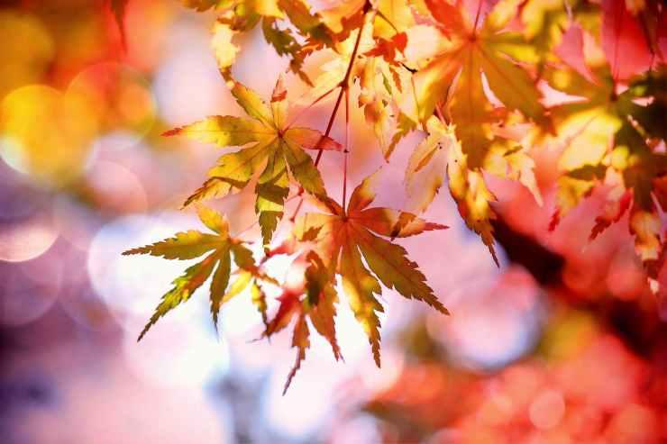 autumn autumn colours autumn leaves beautiful